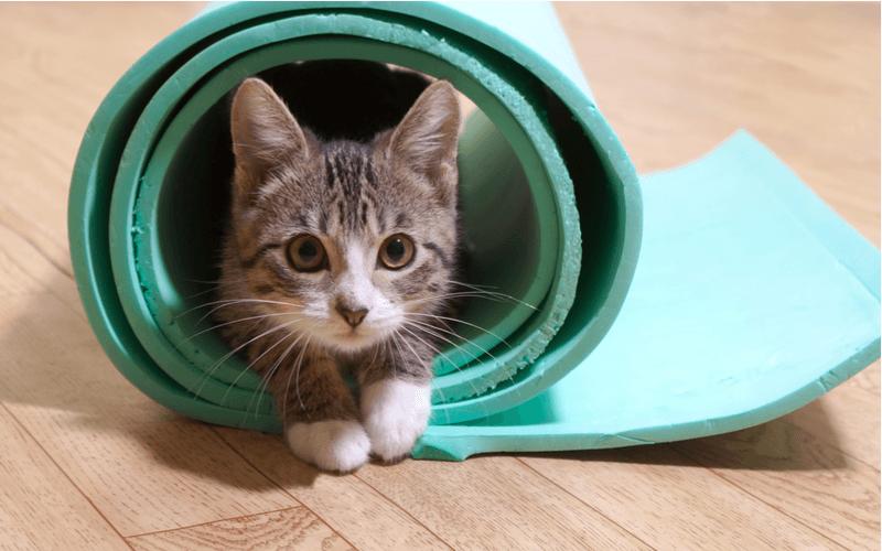 猫 マット