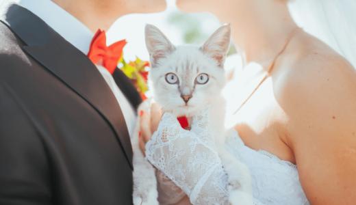 猫も結婚式に出席できる!?ペット用のおすすめフォーマルウェアをご紹介