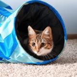 猫 トンネル