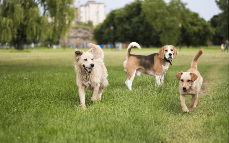 犬 公園 九州