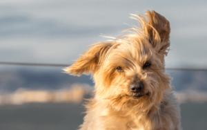 犬 バリカン