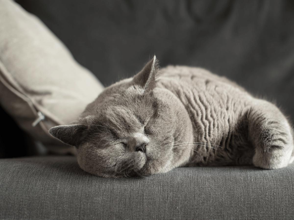 おとなしい猫の種類ランキング5!穏やかな子の見分け方・育てる