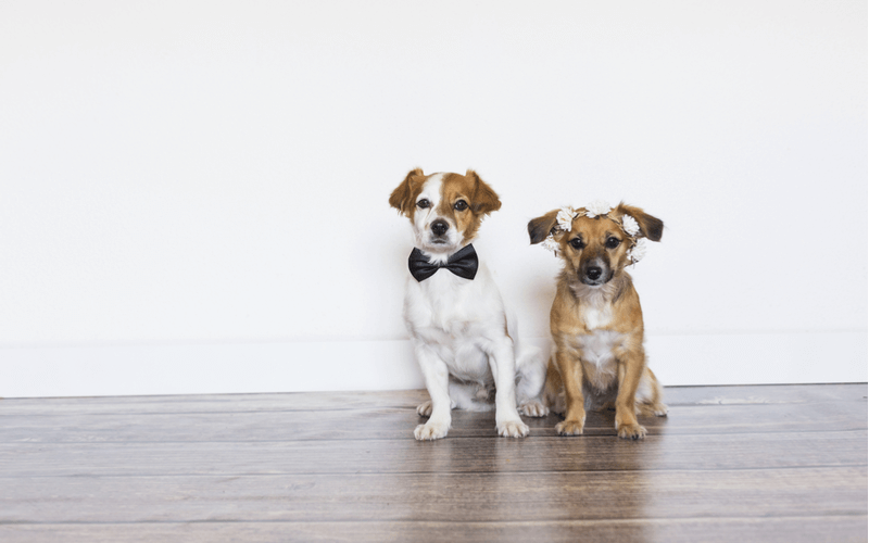 犬同士 結婚式