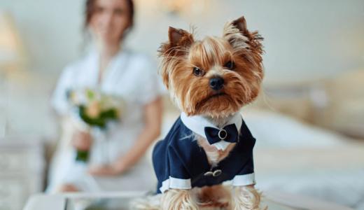 ペットと挙げる結婚式は京都で!おすすめの式場3選と前撮りスポット2選