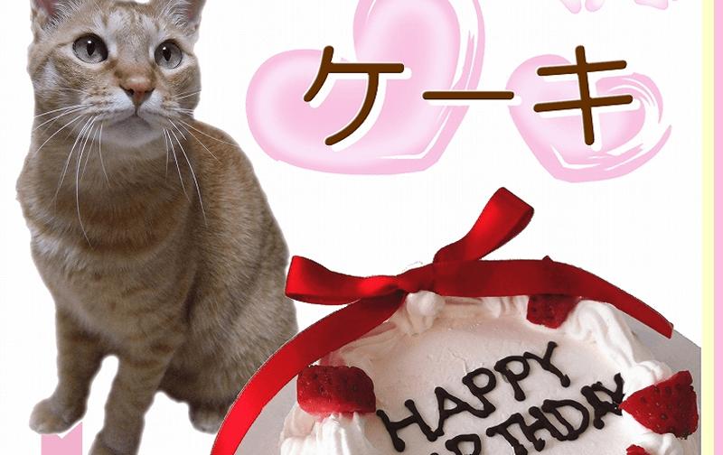 猫用ケーキ 通販