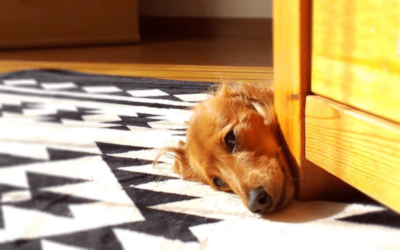 犬 ストレス