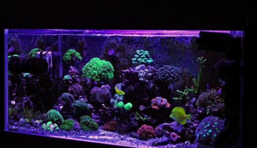 熱帯魚の飼い方の基本!必要グッズとおすすめ5種