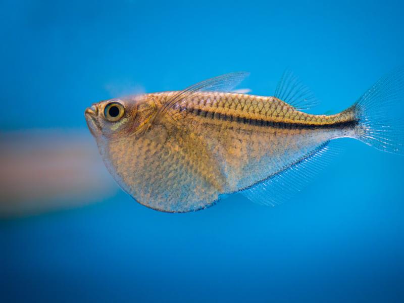 熱帯魚 飼い方