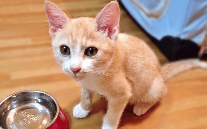 子猫 食事