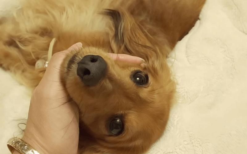 犬 ストレス発散