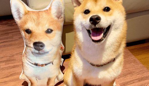柴犬の種類は豊富!色や値段にはどんな違いがある?