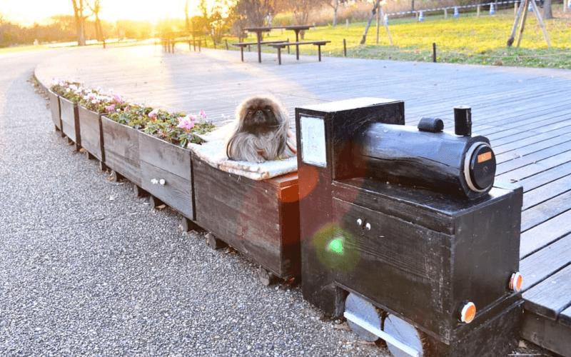 犬と新幹線