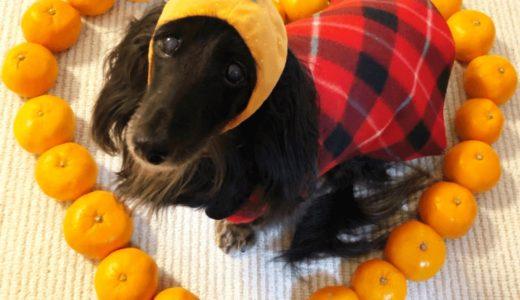 犬はみかんを食べても大丈夫?与えることで得られるメリットや皮に関する注意点について