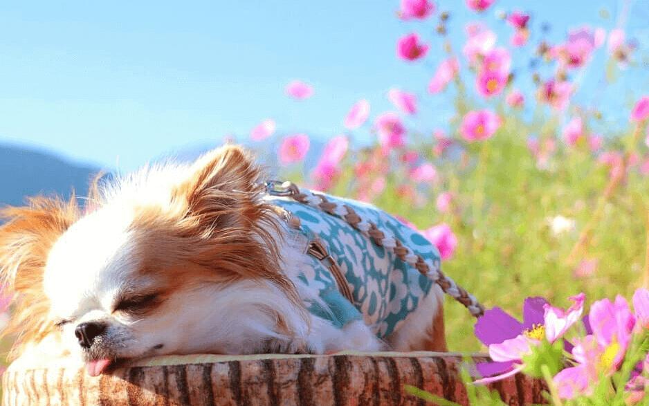 犬 寝てる