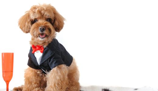 犬用のタキシードは手作りもレンタルも可能?おすすめショップ・通販サイト5選!