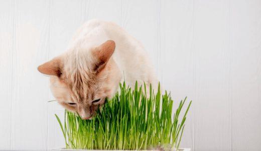 猫草は必要?種からの育て方・犬が食べてしまったときの対処法とおすすめ商品4選