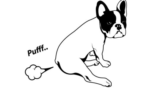 犬のおならが気になる!その臭いと病気の関係は?