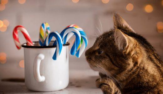 猫が砂糖を食べると害がある?その理由と万が一の対処法