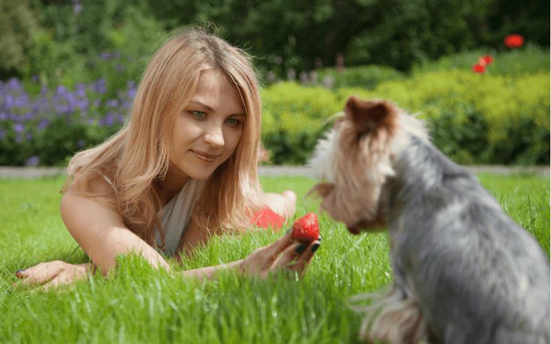 犬にいちごをあげてみよう