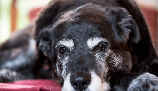 犬専用の介護用品11選!いざというときのために必要道具を揃えておこう