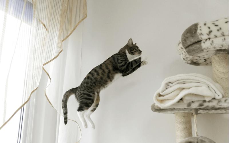 猫 ジャンプ