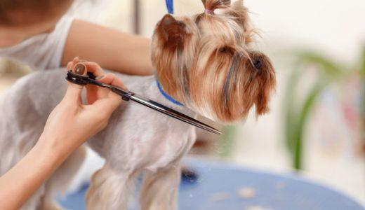世田谷区のトリミングサロンはどこがおすすめ?愛犬を安心してお任せできるお店15選を紹介!