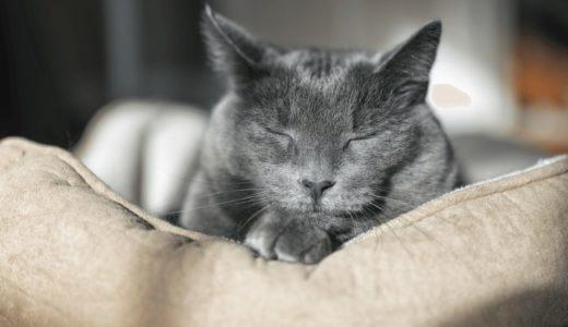 猫の介護用品おすすめ15選!手作りは可能?