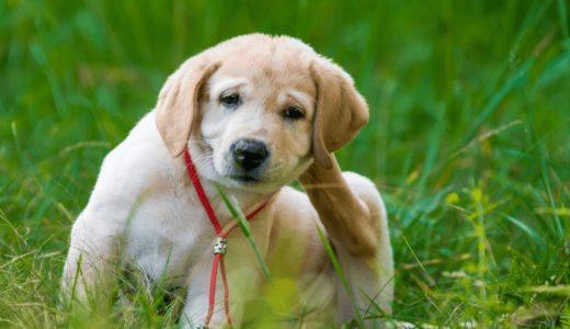 犬につくマダニには要注意!症状や取り方、予防薬などを押さえておこう