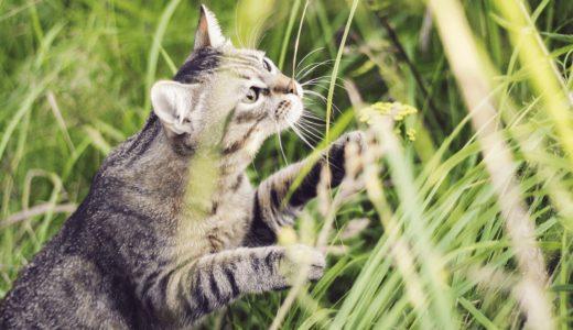 愛猫が迷子になったらどうする?その捜索手順とおすすめの迷子札を紹介