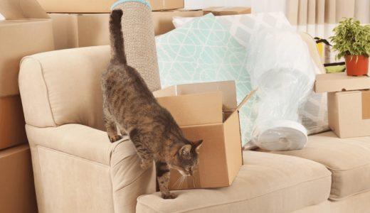 愛猫と一緒に引っ越しをするときのポイントを紹介!環境の変化ストレスはどう対処すべき?