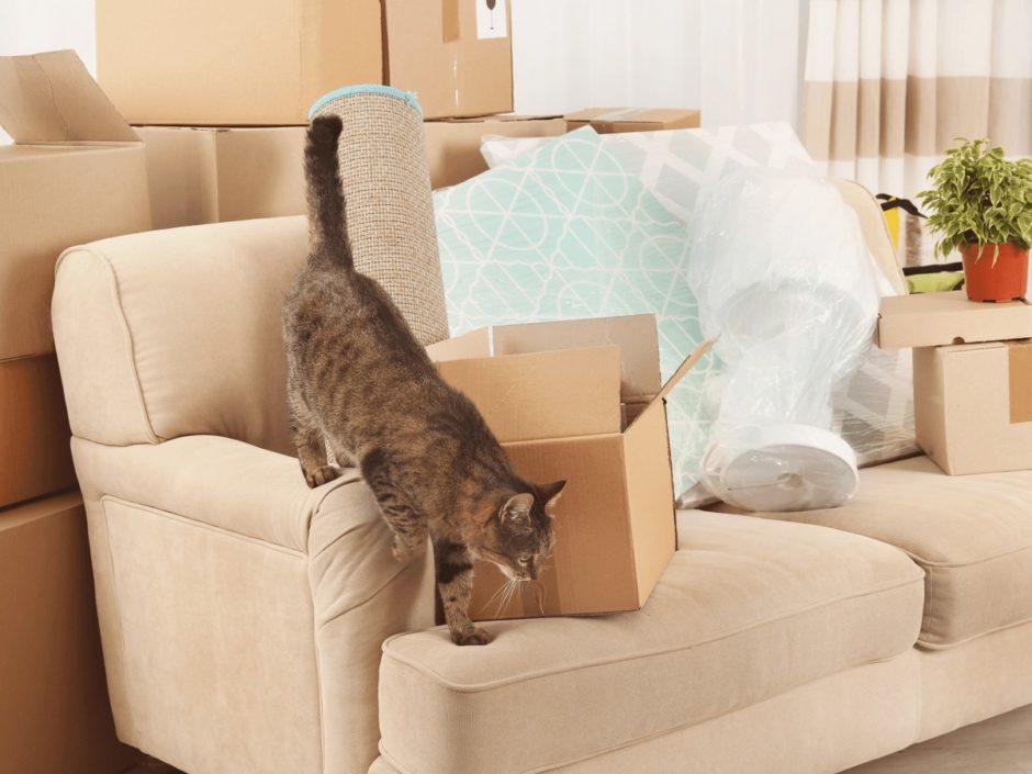 猫 引っ越し