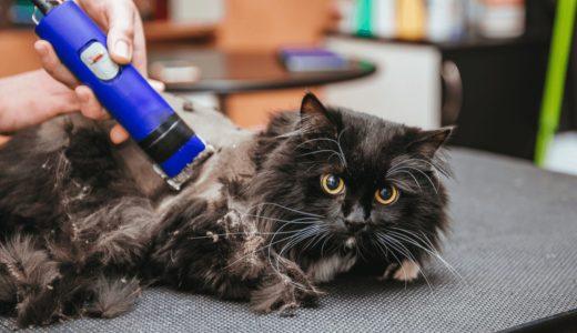 猫のバリカンおすすめ8選!リラックス空間を作って恐怖心を取り除いてあげよう