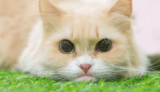 猫の寿命は15歳!?それぞれの特徴と長生きさせるためのコツ4つ