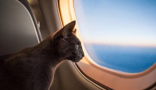 猫を飛行機に乗せるときの流れと注意点!ストレスを与えないように気をつけよう