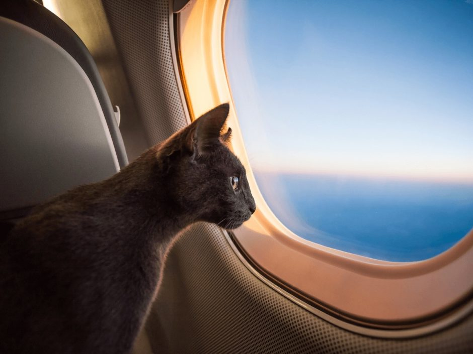 猫 飛行機