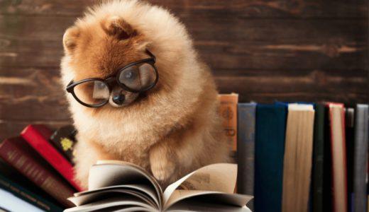 ペットモデルの気になるギャラ事情!事務所やオーディションを受けた方が良いの?