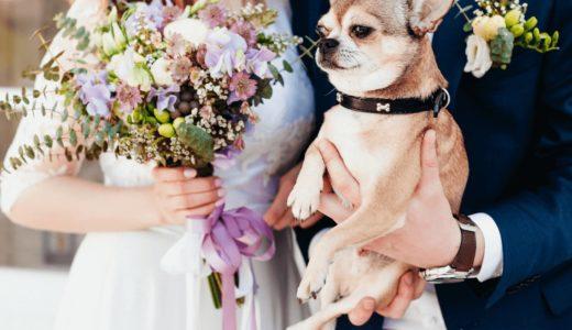 愛犬と結婚式を挙げたい!全国のペット同伴可能の式場7選とおすすめの演出法