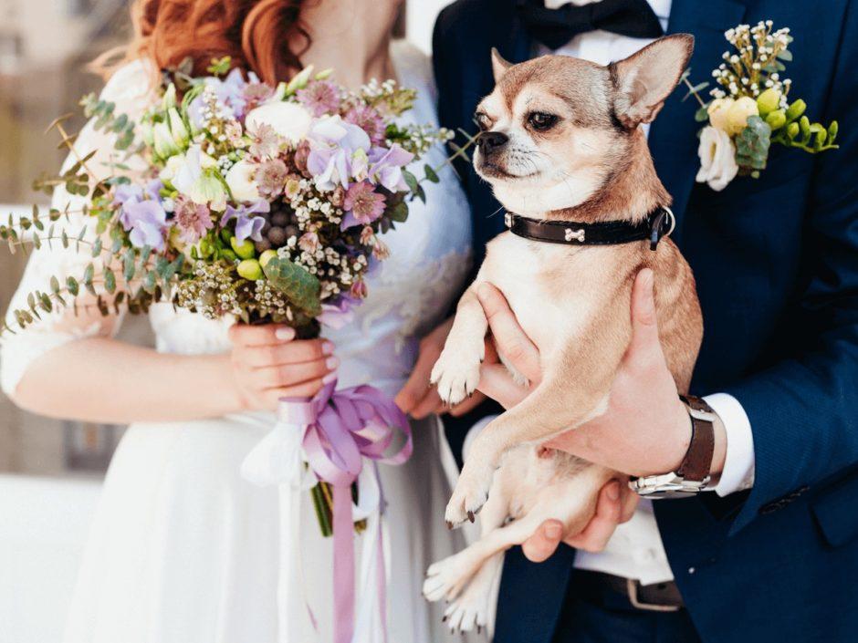 犬 結婚式