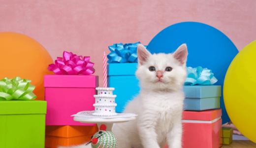猫用ケーキ販売のおすすめ通販5選!素敵なケーキで記念日をお祝いしよう