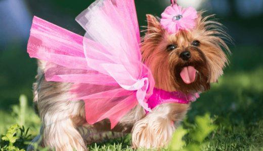 愛犬用ドレスおすすめ6選!おめかしに着用させてみよう