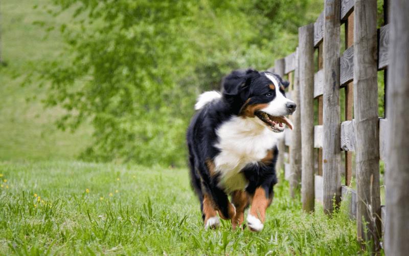 犬 公園 千葉