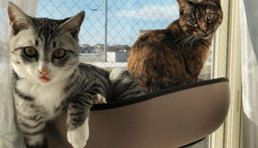 猫の「里親」という選択肢をぜひ知ってほしい!その注意点や心構えとは