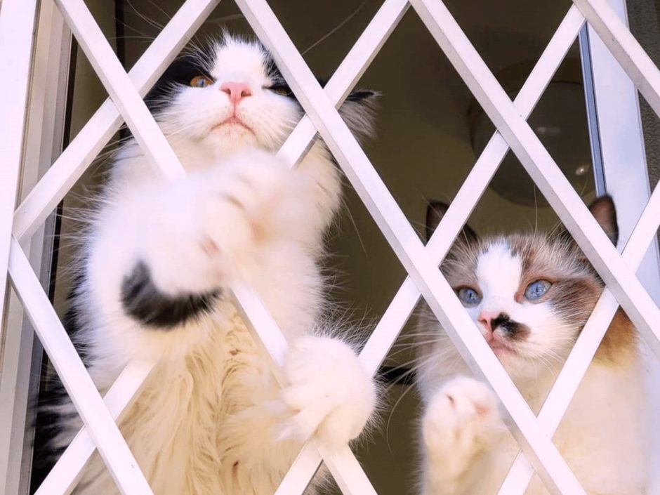 愛猫お留守番事情って?1週間までなら大丈夫?トイレやエサはどうしてる?
