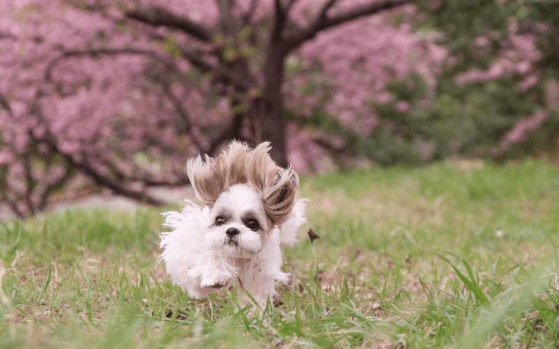 犬が食べてはならない草
