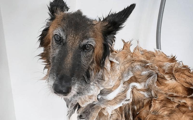 月に2回から4回の犬種