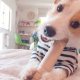 犬 歯磨きおもちゃ
