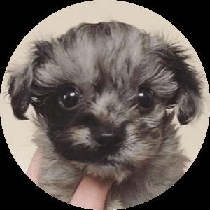 ルー [tiny_chiichan]