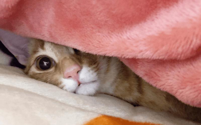 猫の睡眠時間はなぜ長いの?猫の睡眠の種類と質の良い睡眠をとらせるためにできること