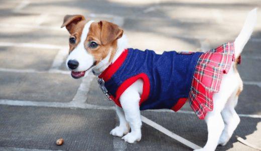犬服サイズの表にある体重は目安程度に!正しい測り方のポイントとおすすめ手作り本15選