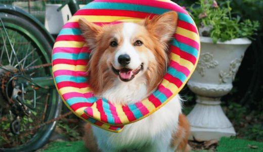 犬用エリザベスカラーおすすめ10選!手作り法や嫌がる理由を把握しておこう